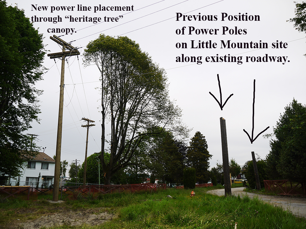 URBAN ONE slashes through the canopy for temporary power connections at Little Mountain